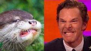 Bendedict Cumberbatch als wütender Otter