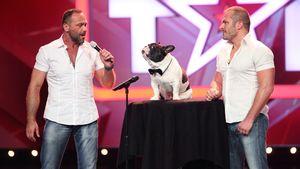 Das Supertalent singende Bulldogge