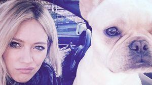 Hilary Duff mit ihrem Hund
