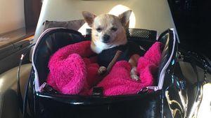 Paris Hilton zeigt ihren Boss-Hund