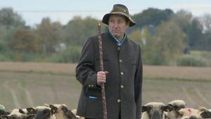 Schäfer Heinrich mit seinen Schafen auf der Wiese