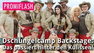 Thumbnail Dschungelcamp 2015