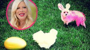 Tori Spelling und ihr pinker Hund