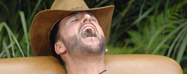 Dschungelcamp 2014: Michael Wendler mit Spinne im Mund
