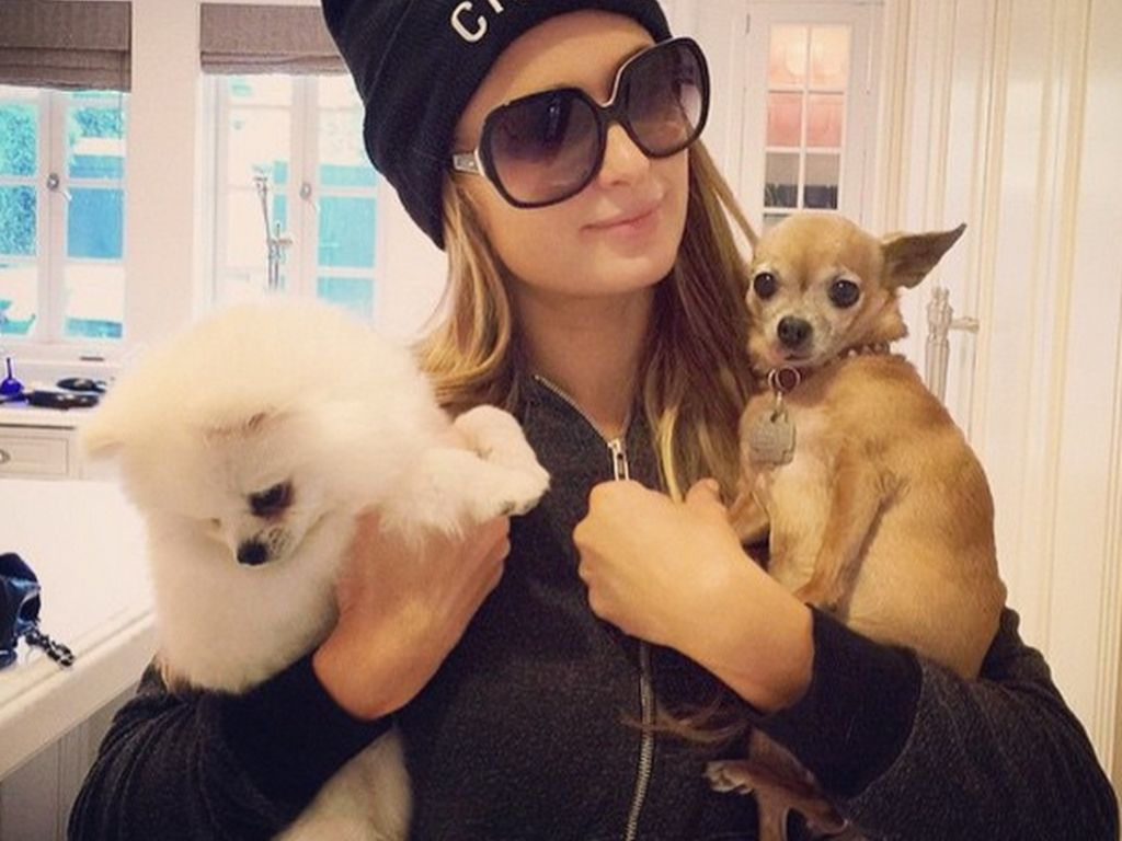 Paris Hilton mit Prince Hilton The Pom und Tinkerbell