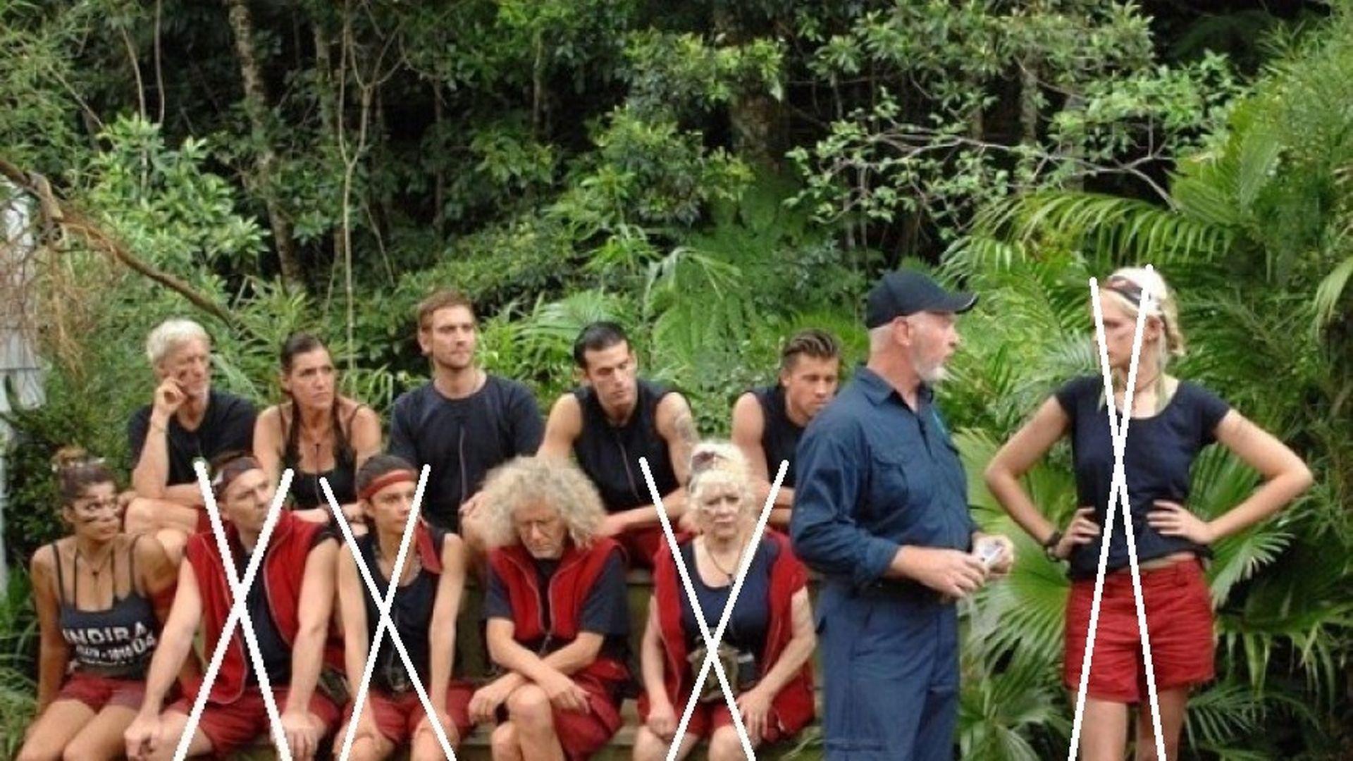 Wer Wird Dschungelkönig Umfrage