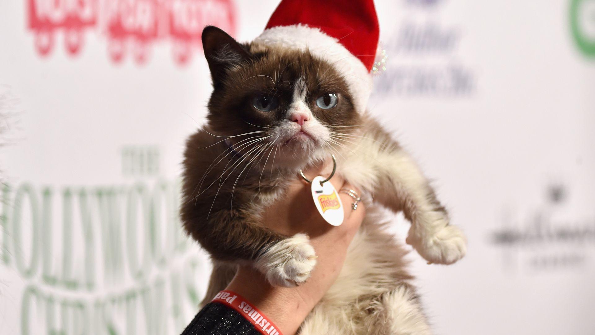 Cat Hat Tussauds