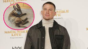Nach Tod von Hund Lulu: Channing Tatum hat neuen Welpen