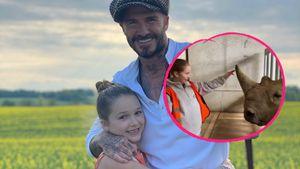 Vater-Tochter-Tag: Hier wird Harper Beckham zur Zoowärterin