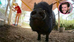 Liam Hemsworth hat ein Bild von Miley Cyrus' Schwein gepostet