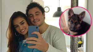 Danilo Cristilli und seine Freundin sind jetzt Hunde-Eltern