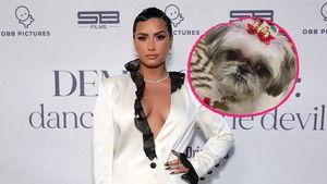 """""""Ruhe in Frieden"""": Demi Lovato trauert um Familienhund Bella"""