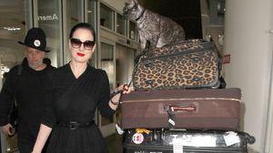 Dita Von Teese mit einem riesigen Kofferberg am Flughafen in Los Angeles