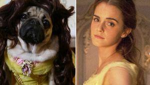 Doug the Pug und Emma Watson