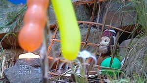 Dschungelcamp: Was wurde aus dem Knast-Bewohner?