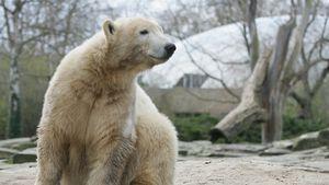 7. Todestag vom kleinen Eisbären: Knut bleibt unvergessen!