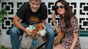 George und Amal Clooney mit ihren Hunden