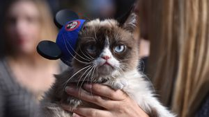Not amused: Grumpy Cat hasst den Red Carpet
