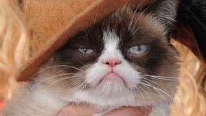 Welt-Katzen-Tag: Grumpy Cat freut sich tierisch!