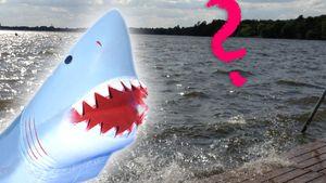 """Hai-Alarm am Müggelsee"" - Was steckt dahinter?"