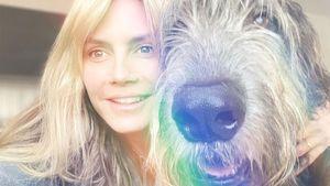So süß überraschten Heidi Klum und Tom Kaulitz ihren Hund