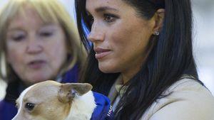 Herzogin Meghan setzt sich im Namen der Royals für Tiere ein