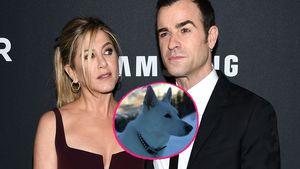 Jennifer Aniston & Justin Theroux trauern zusammen um Hund!