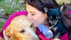 Jenny Frankhauser und Mama Iris trauern um Hündin Priscilla