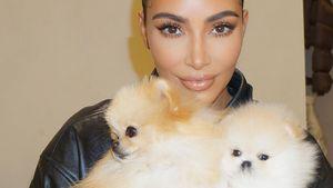 Wie süß! Hier shootet Kim Kardashian mit ihren Pomeranians