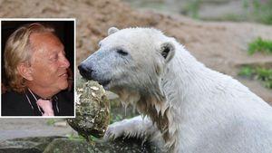 Liebestipps für Eisbär Knut