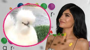 Kylie Jenner mit ihrem Huhn
