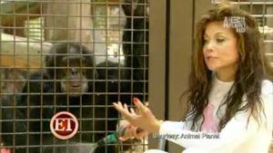 Tränen-Video: La Toya heult sich beim Affen aus