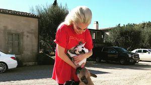 Freudentränen: Lady Gaga hat Hunde nach Entführung zurück
