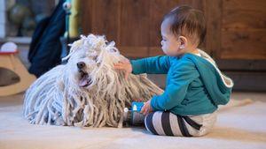 Max Zuckerberg, Tochter von Mark Zuckerberg, mit Hund Beast
