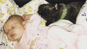 Mia Rose mit Hund: Melanie Müller kriegt wieder Mama-Kritik