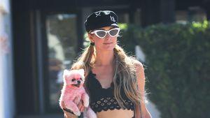 Skurriler Anblick: Paris Hilton mit pinkem Hund unterwegs