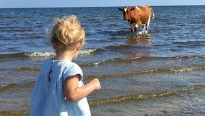 Tierisch süß: Prinzessin Leonore geht mit einer Kuh baden!