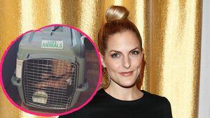 Sandy Mölling sorgt für Aufsehen: Kind sitzt im Hundekäfig!