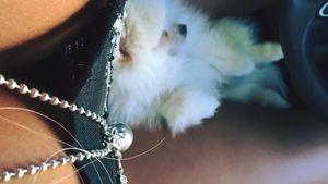 Sophia Wollersheim und ihr Hund Barney Boo