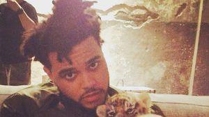 Nach Trennung von Sel: The Weeknd hat neue Mieze am Start!