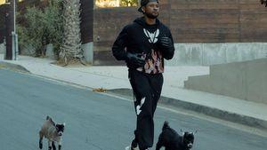 Mit Ziegen-Pic: Usher feiert seinen 43. Geburtstag humorvoll