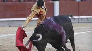 Blutige Tradition: Sollten Stierkämpfe verboten werden?