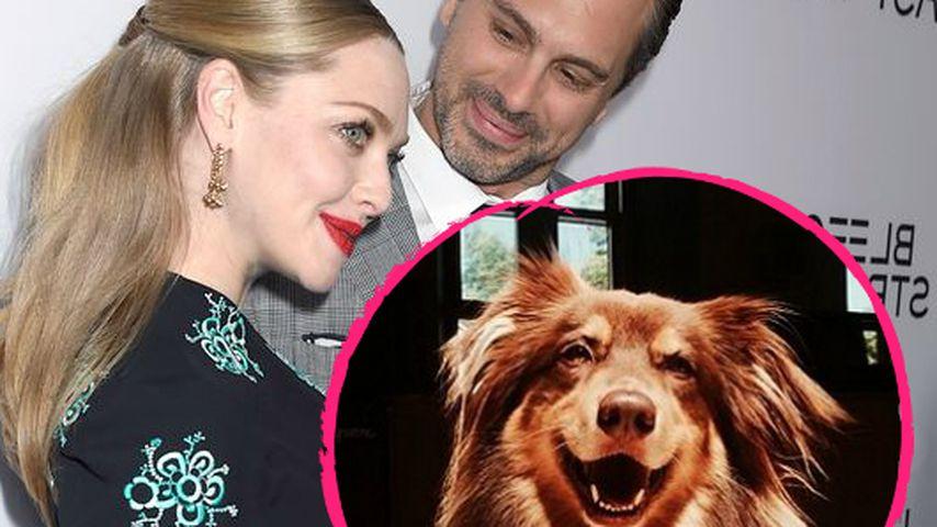 Amanda Seyfrieds heimliche Hochzeit: Nur ihr Hund war dabei!