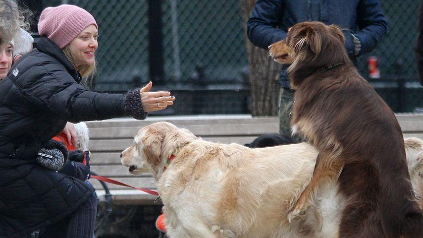Hund in Love: Ist Amanda Seyfrieds Finn vergeben?