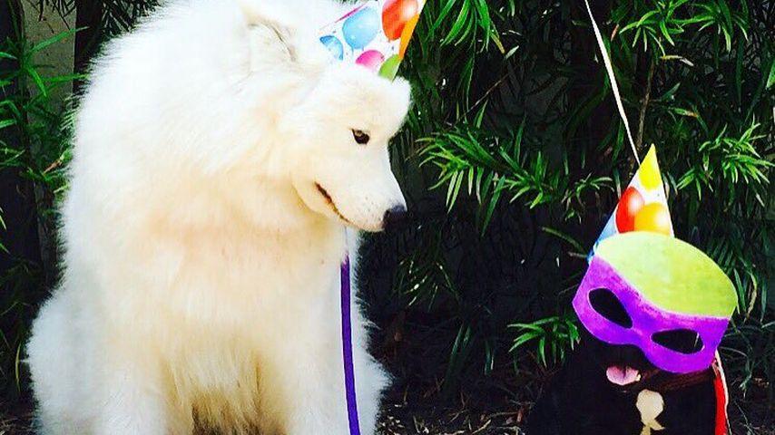 Ariel Winters Hunde feiern Geburtstag