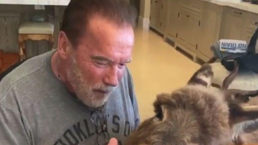 Bezaubernd: Arnie Schwarzenegger singt seinem Esel Ständchen