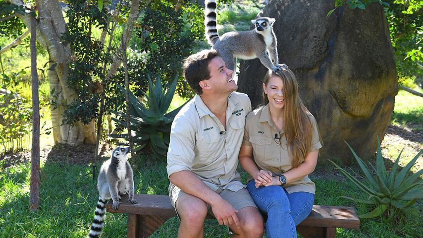 Erstes Monatsjubiläum: Bindi Irwin und ihr Chandler happy