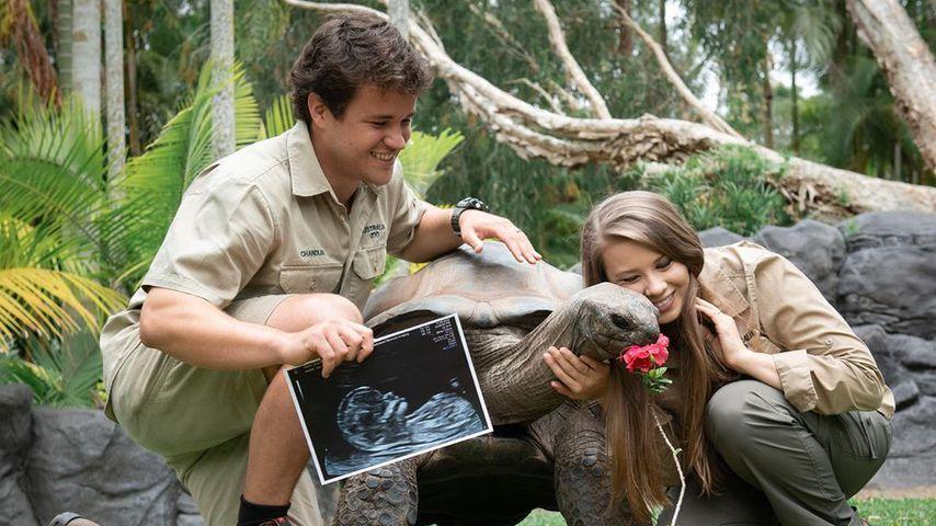 Bindi Irwin und Ehemann Chandler verraten das Babygeschlecht
