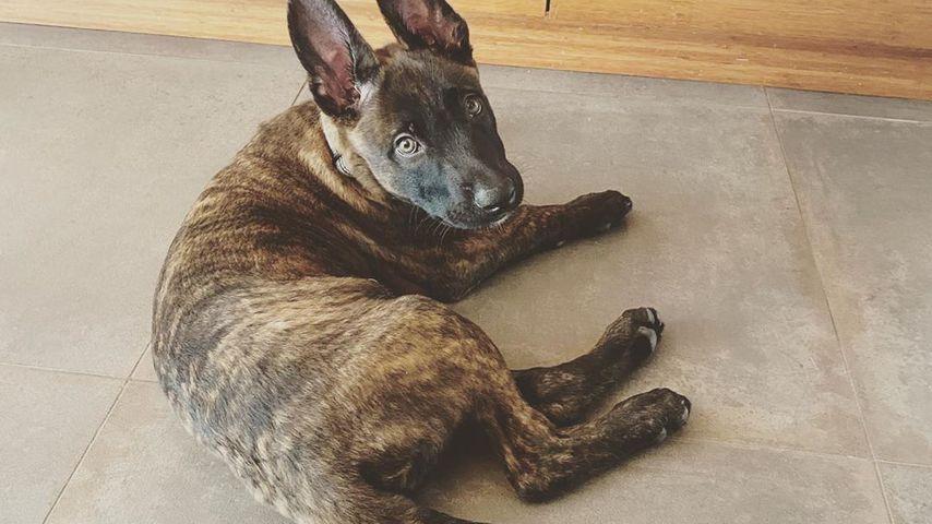Channing Tatums Hund Rook