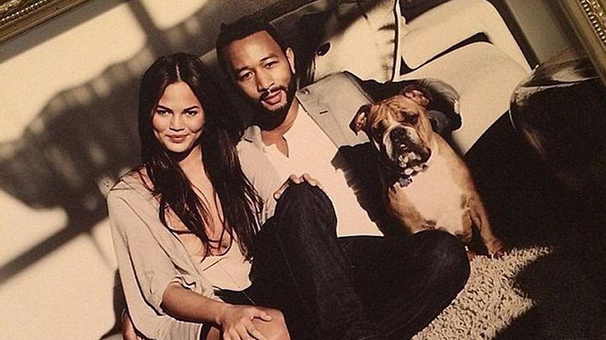 """""""Liebes-Hund"""" tot: John Legend schenkte ihn Chrissy zu Date"""